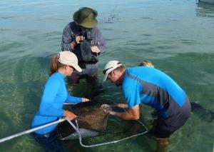 Shark-Bay-videos