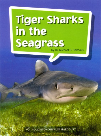 Tiger-Sharks-in-the-Seagrass
